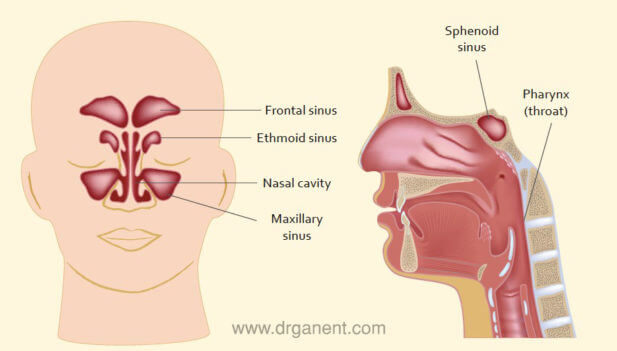 Sinus & Sinusitis | Dr Gan ENT Specialist Singapore